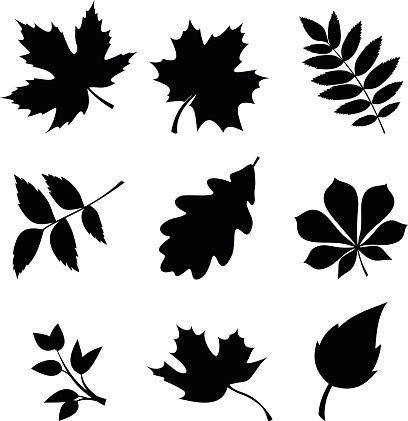 408x421 Set Of Leaves. Vector Black Silhouettes. Vector Art Illustration