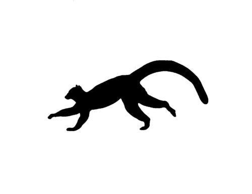 500x386 33 Best Lemur Designs Images On Lemur, Lemurs And Logo