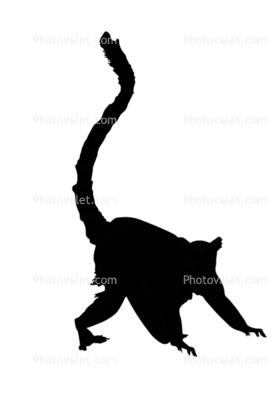 279x418 Ring Tailed Lemur Silhouette, (Lemur Catta), [Lemuridae], Shape