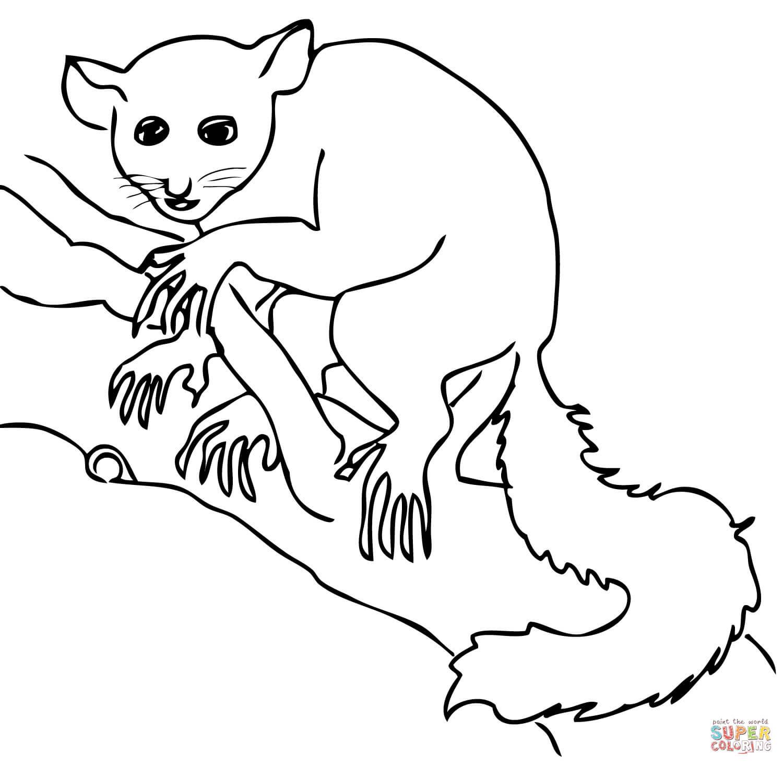1500x1464 Aye Aye Lemur Coloring Page Free Printable Coloring Pages