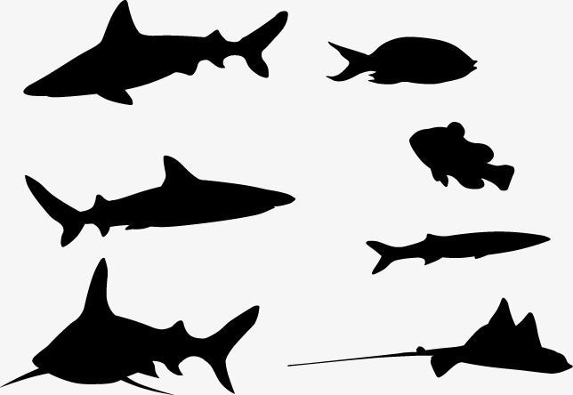 644x444 Fish Silhouette, Black, Sketch, Marine Life Png Image And Clipart