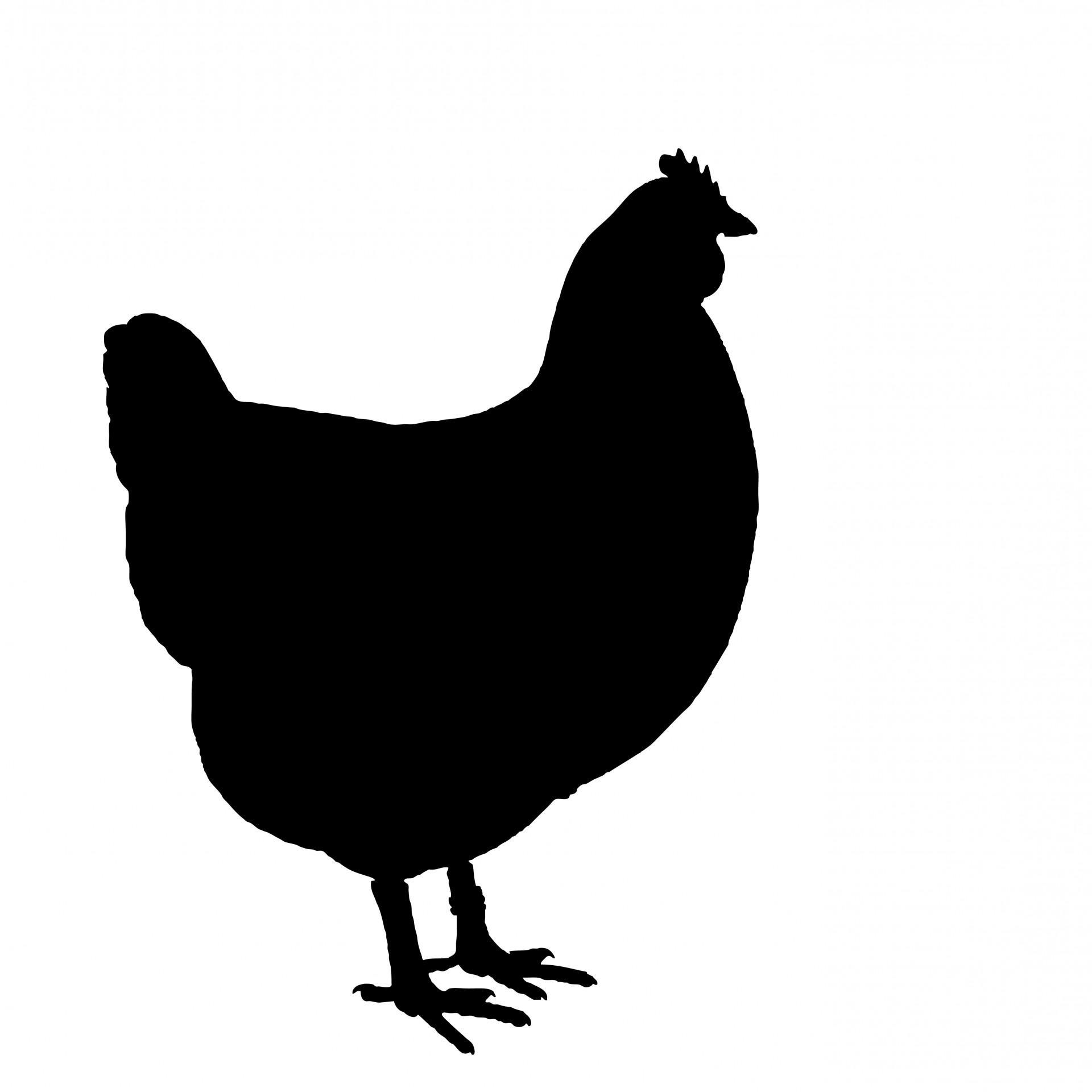 1920x1920 Top White Chicken Silhouette Clip Art Photos