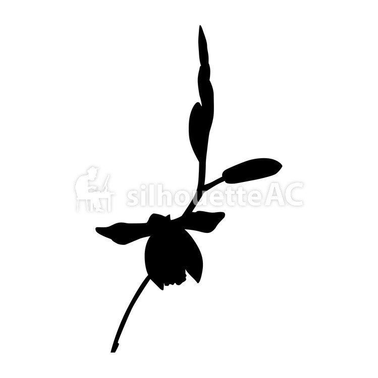 749x750 Free Silhouette Vector Lily, Up