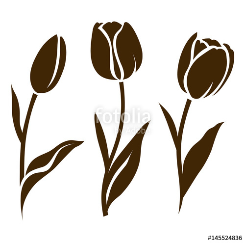 500x495 Set Tulip Silhouette. Vector Illustration. Collection