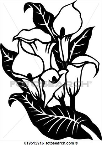 325x470 Clip Art Cala Lily Calla Flower Varieties Fotosearch 299961.jpg