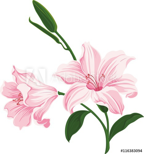 468x500 Beautiful Blooming Lily Flowers. Floral Postcard. Wedding Elements