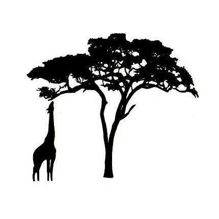 430x430 Six Trees Acacia Silhouettes