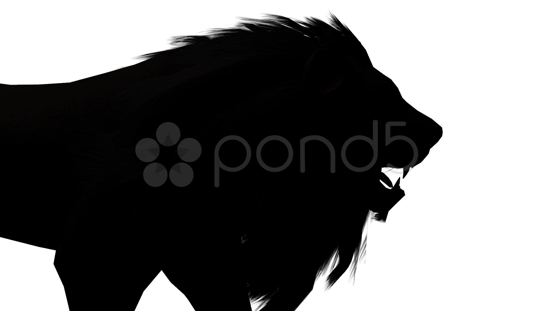1920x1080 Lion Walk,endangered Wild Animal Wildlife Walking Sketch