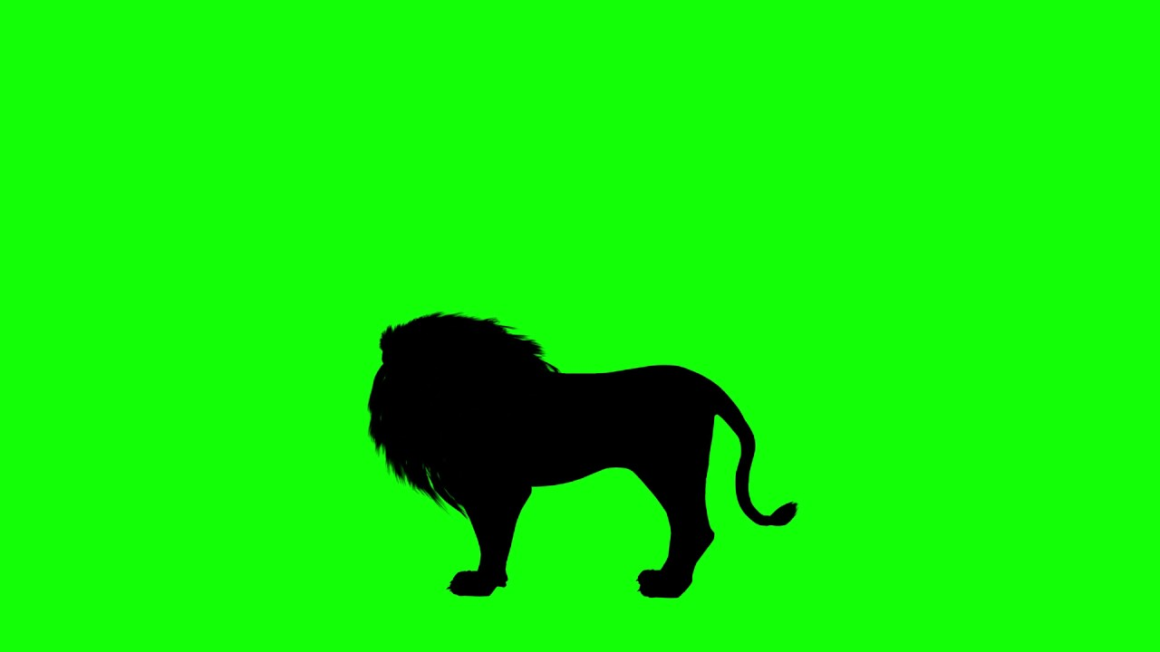 1280x720 Free Hd Video Backgrounds Animal Silhouette Lion Idle Howling