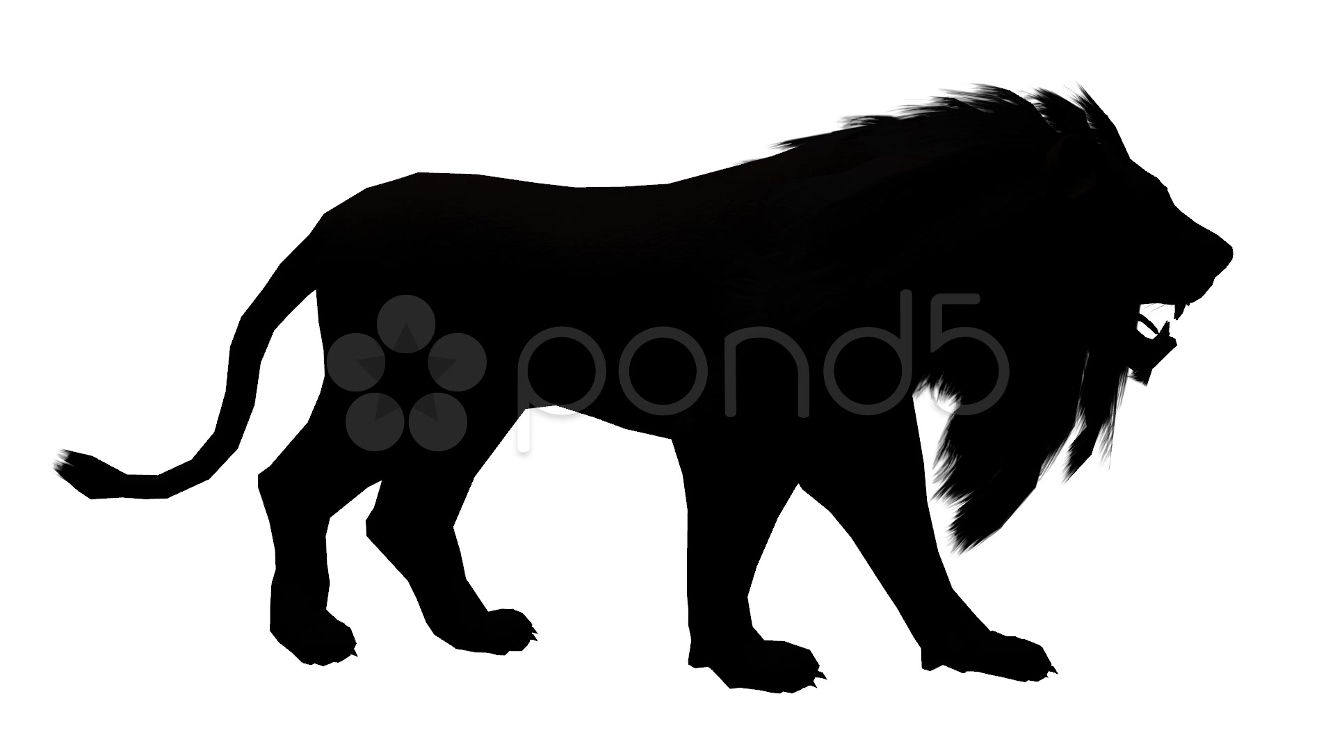 1920x1080 Lion Walk,endangered Wild Animal Wildlife Walking Sketch