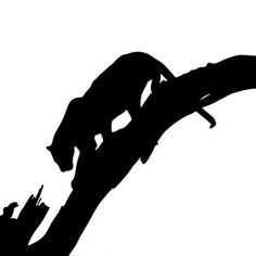 236x236 Lioness In Silhouette Image Gallery Lioness Face Silhouette