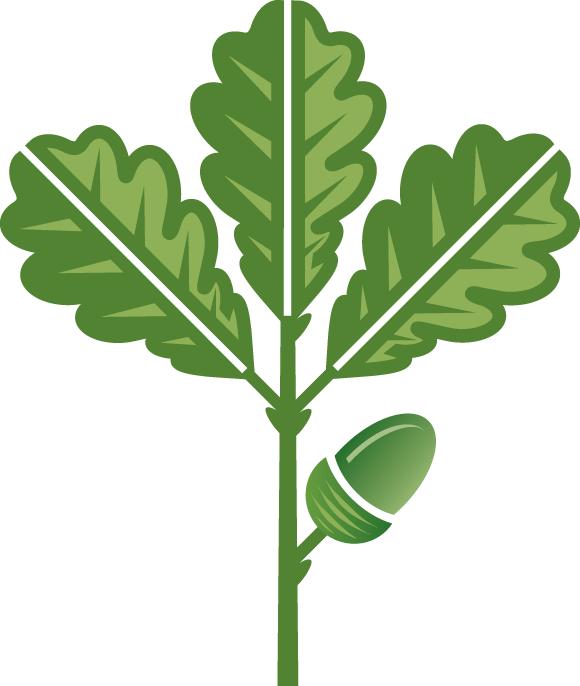 580x686 Oak Leaves Clip Art