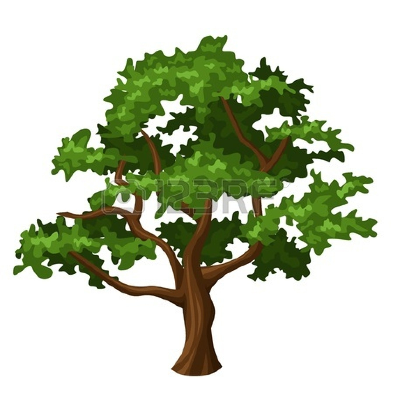 1350x1350 Oak Trees Clipart