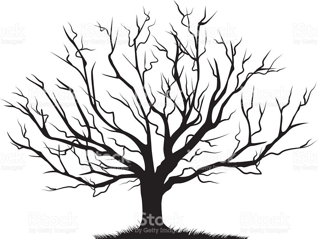 1024x770 Deciduous Bare Tree With Empty Branches Black Silhouette Isolated