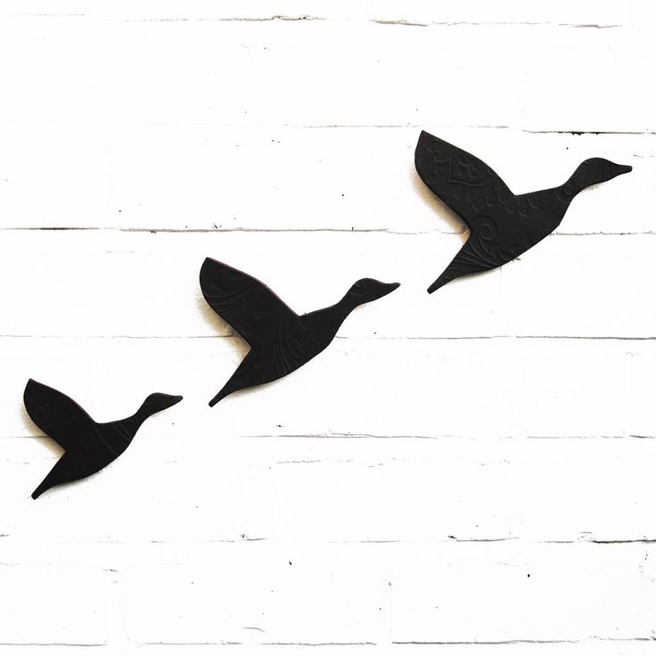 736x736 Best Photos Of Flying Duck Outline
