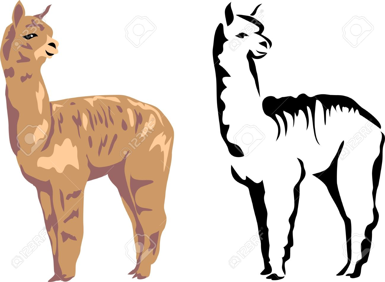 1300x952 Lama Clipart Baby Llama Pencil And In Color Lama Clipart Baby