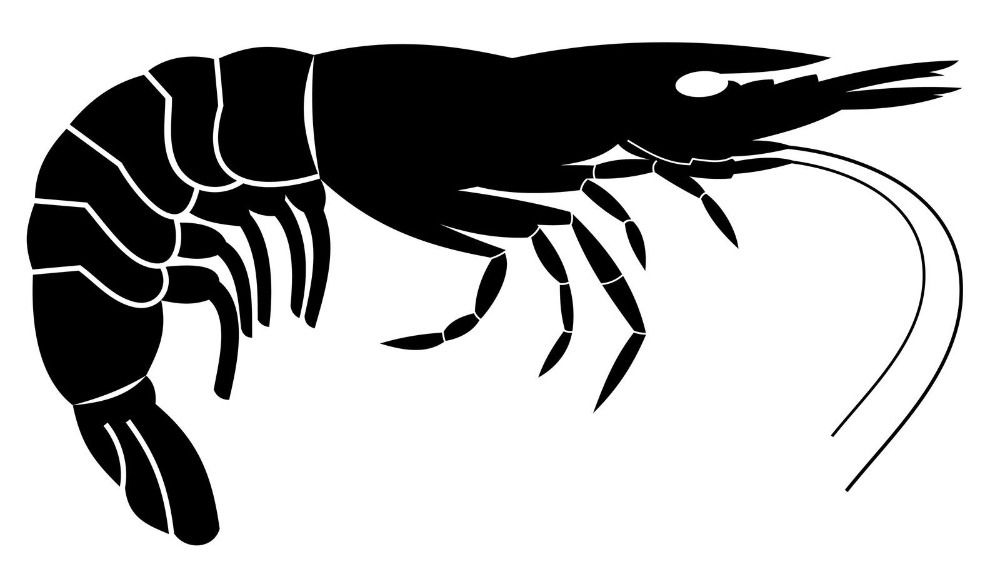 1000x564 Seafood Vinyl Wall Decal Lobster Giant Shrimp Silhouette Mural Art