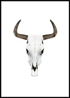 236x327 Cow Skull Pencil Drawing