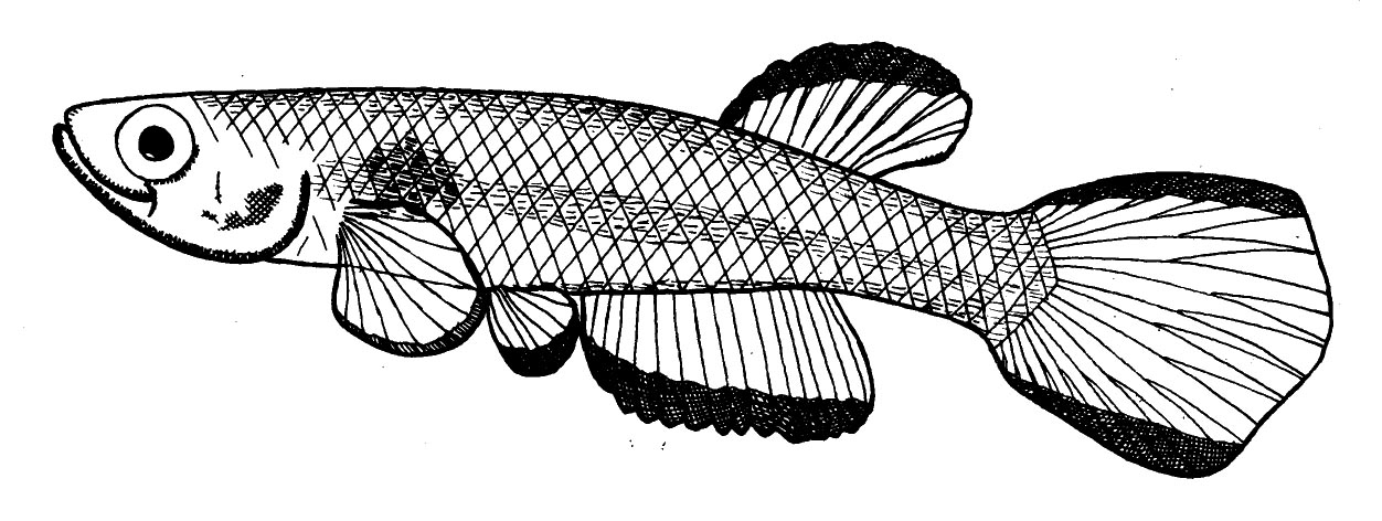 1252x472 Names Of The Week 2015 The Etyfish Project