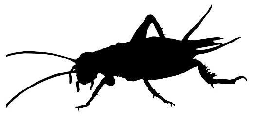 520x240 Los Angeles Is The Chapulin Capital Of The U.s. Bugs For Dinner
