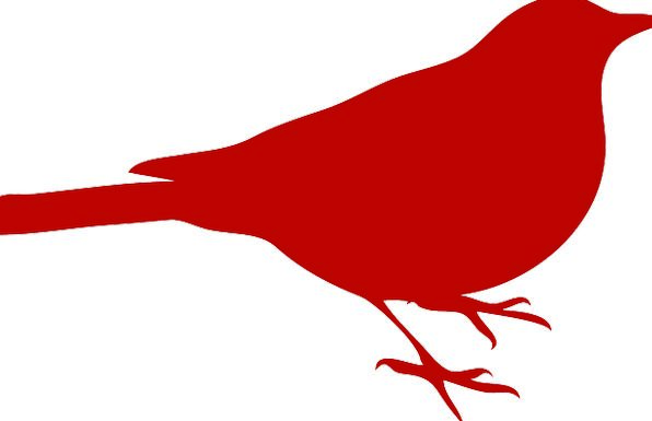 596x385 Black Bird, Sedentary, Silhouette, Outline, Sitting, Red