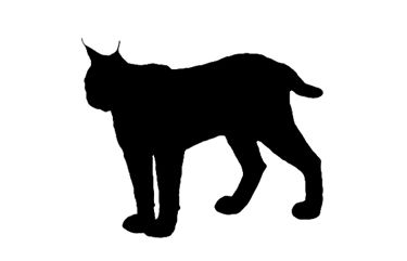 lynx silhouette at getdrawings com free for personal use lynx