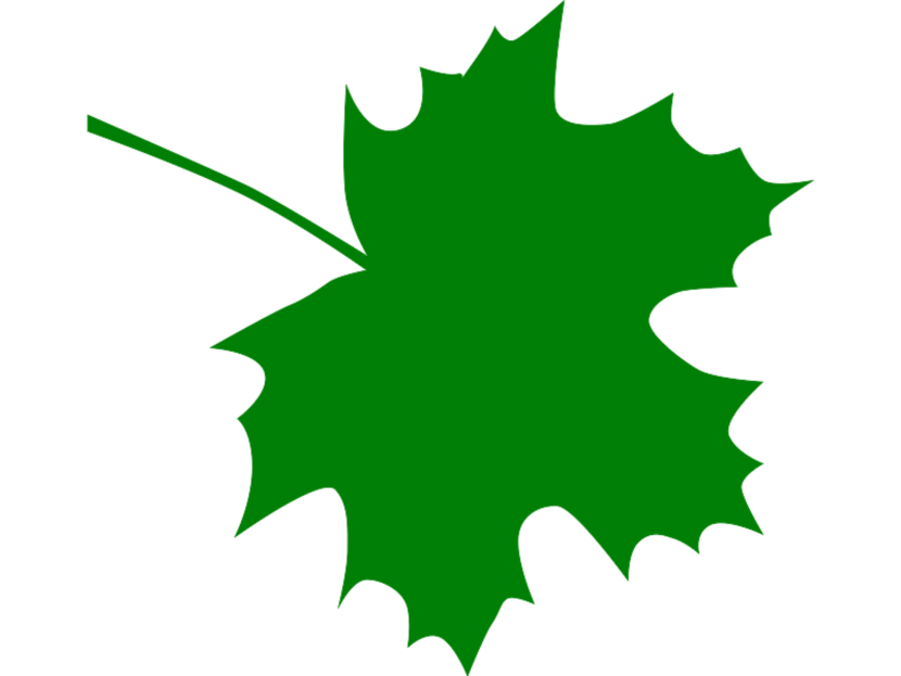 830x623 Maple Leaf Clip Art