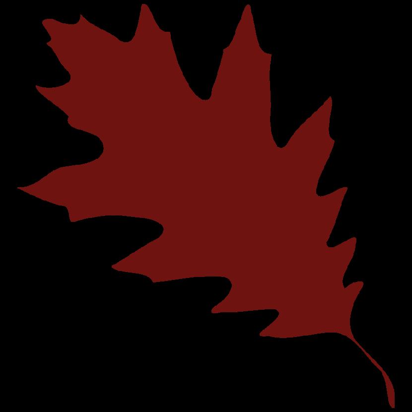 830x830 Maple Leaf Clipart Silhouette