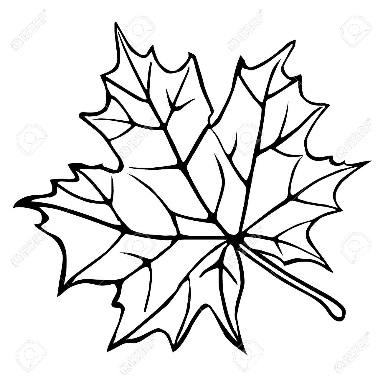 1300x1300 Drawn Maple Leaf Silhouette