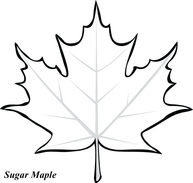 756x714 Vector Maple Leaf Silhouette Royalty Free Vectors And Vector Maple