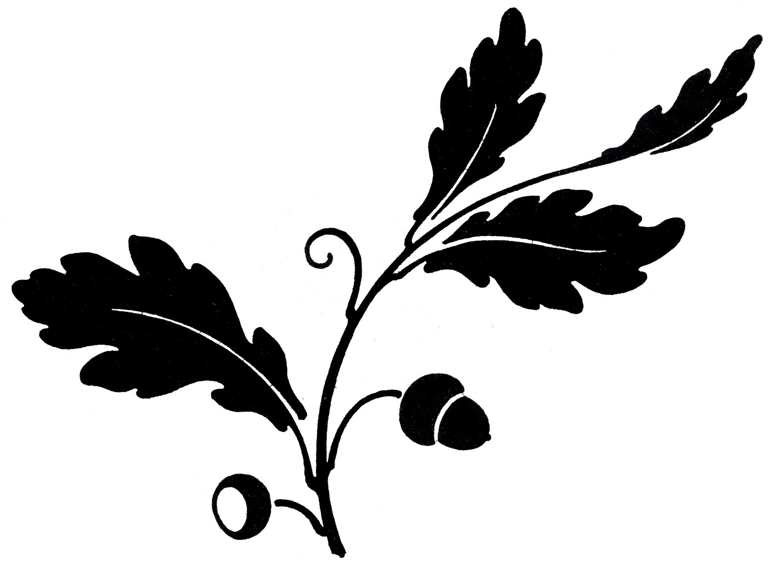 1541x1137 Maple Leaf Clipart