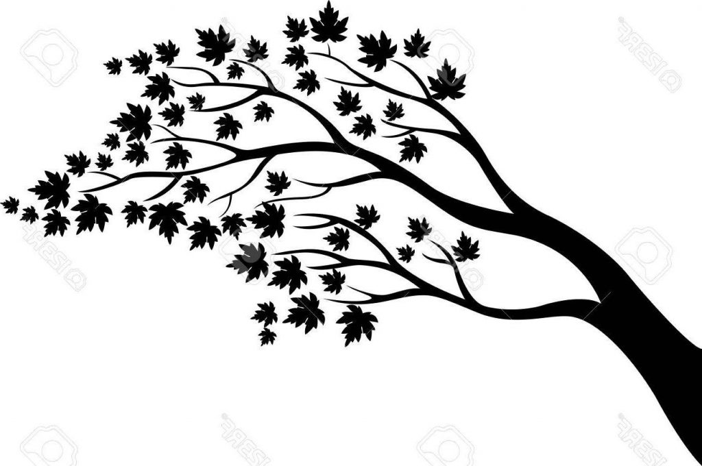 1024x680 Unique Maple Tree Silhouette Cartoon Pictures