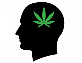 310x240 Major Study Finds Marijuana Does Not Reduce Iq In Teens Alternet