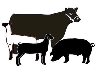 388x283 2017 Livestock Show Amp Sale Updates North Carolina Cooperative