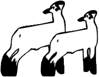 197x153 Rams Rill Family Club Lambs