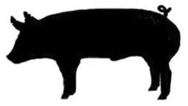 265x150 Steer Clipart