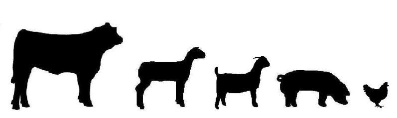 797x237 Animal Clipart Livestock Show
