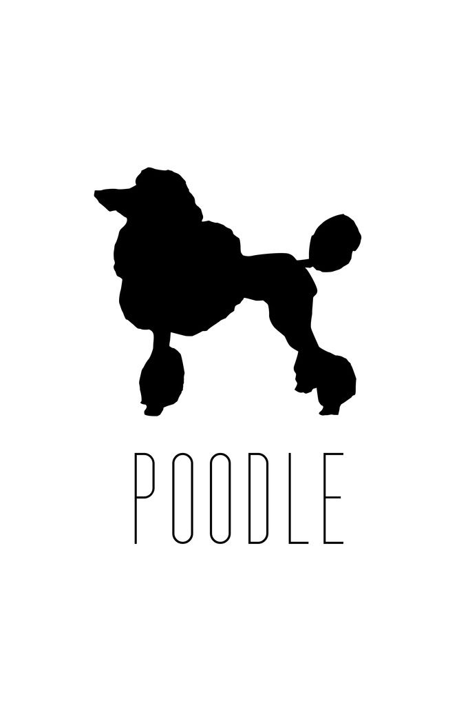 683x1024 Dogs Poodle Formal Dog Breed Standard Miniature Toy Silhouette