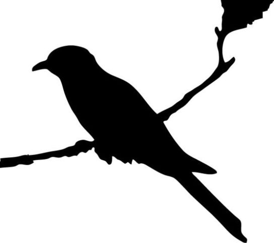 Mockingbird Silhouette