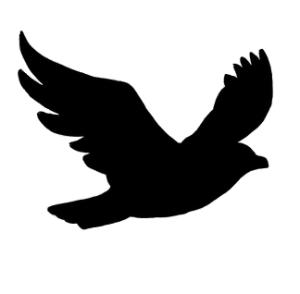 300x294 Png Mockingbird Transparent Mockingbird.png Images. Pluspng