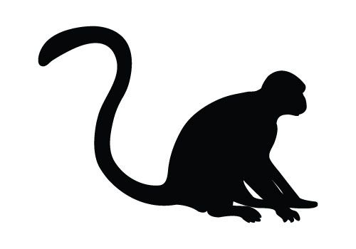 500x350 Monkey Silhouette Single Vector Silhouette Of A Monkey Perfect