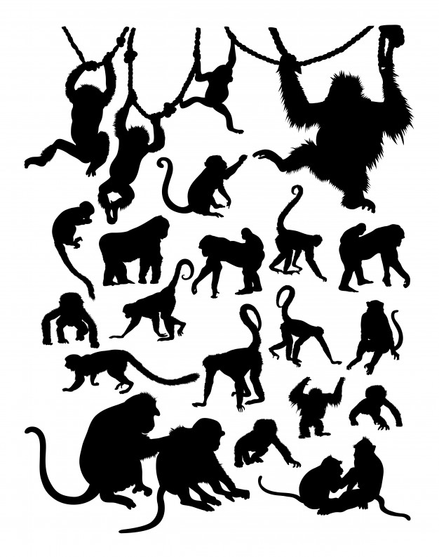626x793 Monkey Silhouette Vectors, Photos And Psd Files Free Download