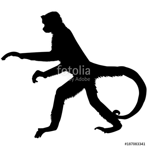 500x500 Spider Monkey Silhouette Vector Graphics Stock Image And Royalty