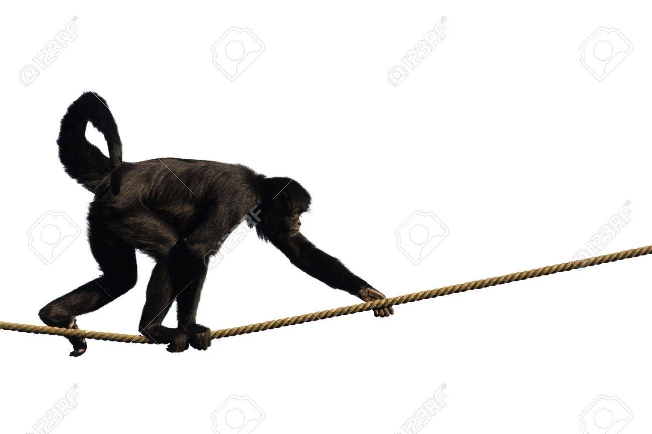 1300x866 Monkeys Climbing Drawing