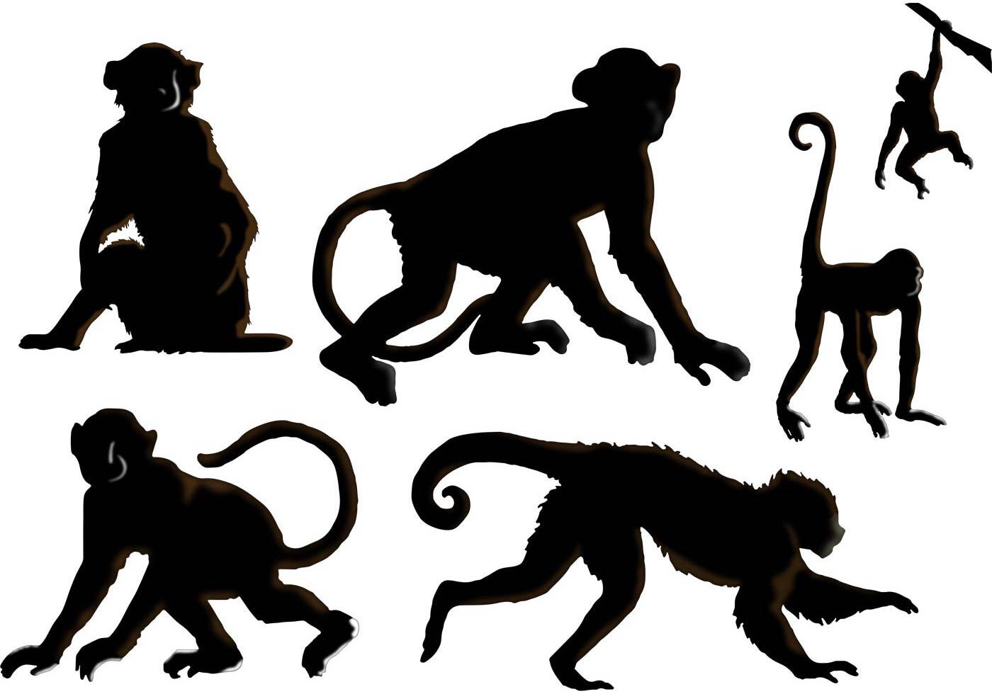1400x980 The Monkey Vectors