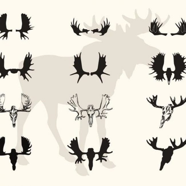 650x650 Free Vector Moose Horns And Skull Vector Silhouettes