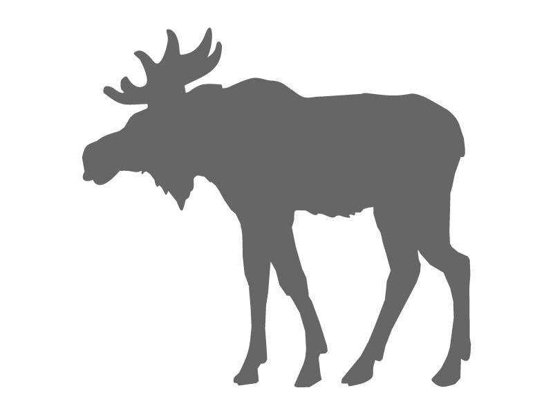 800x600 Furry Moose Stencil Stencils Moose, Stenciling