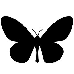 240x240 Moth Silhouette Vector Graphics