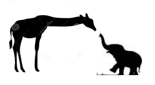 652x360 Giraffe W Baby Elephant Ink Baby Elephants