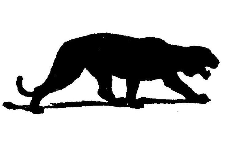 735x474 Mountain Lion Killed In Paris Ky